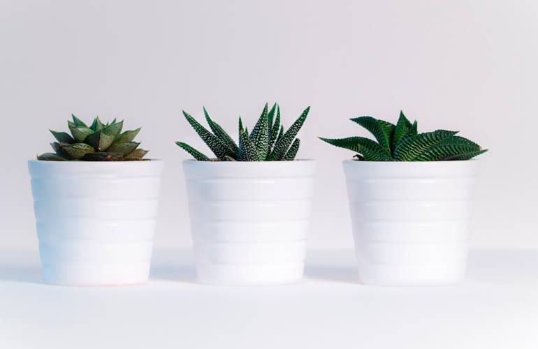 Plantas Exterior e Interior